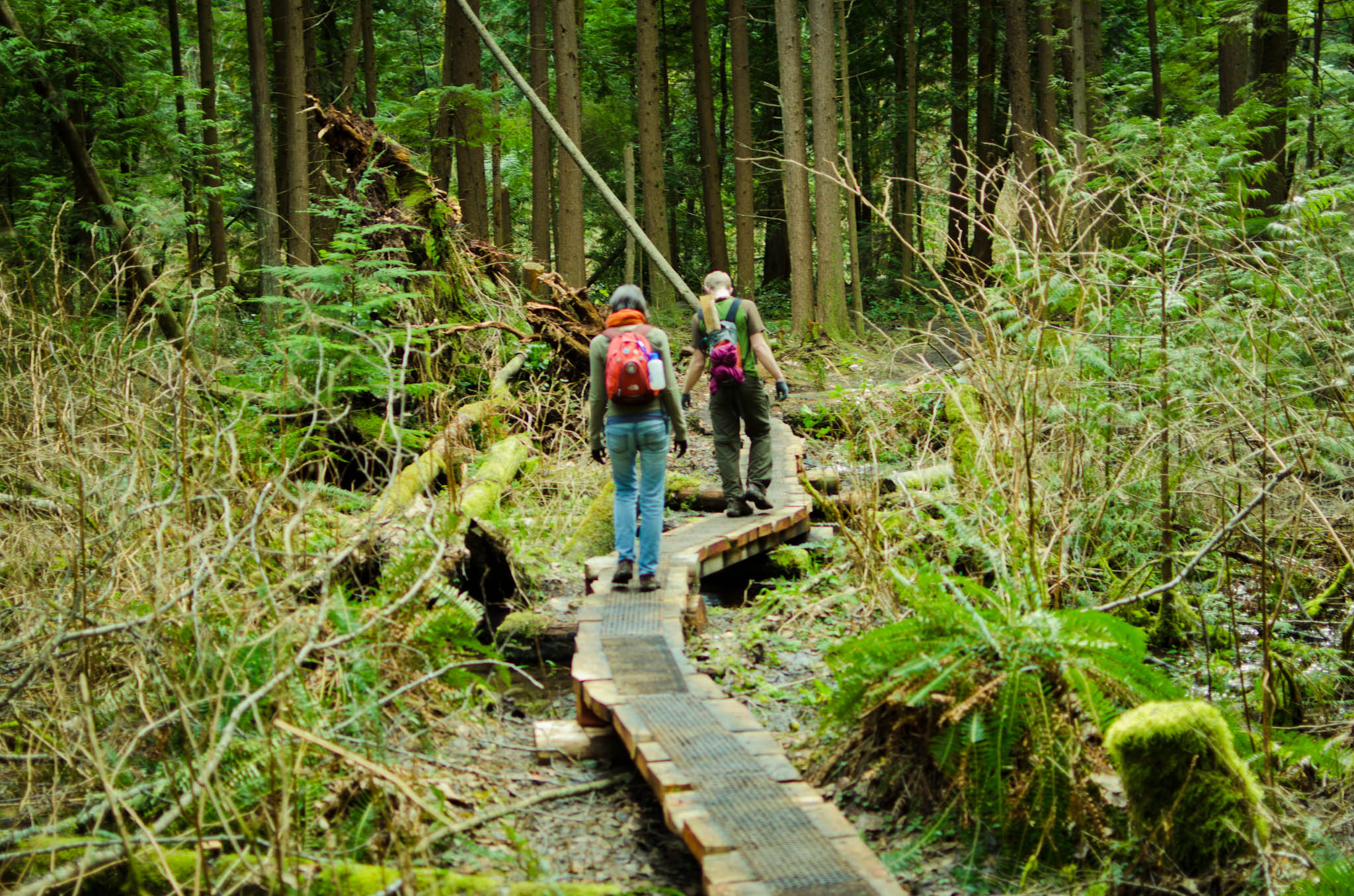 A Leisurely Hike through Cougar Mountain | oh my goodness ...