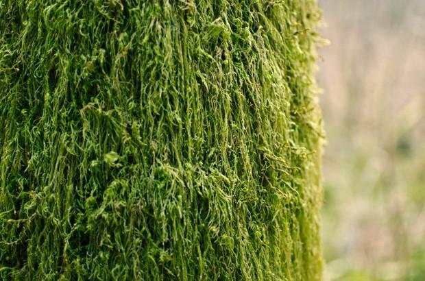 close up of moss on tree