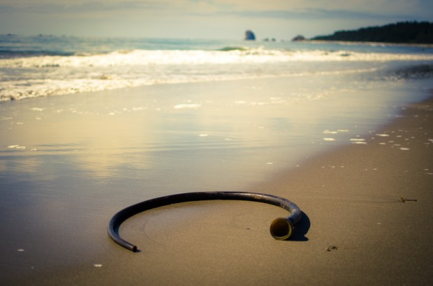 washed up bull whip kelp